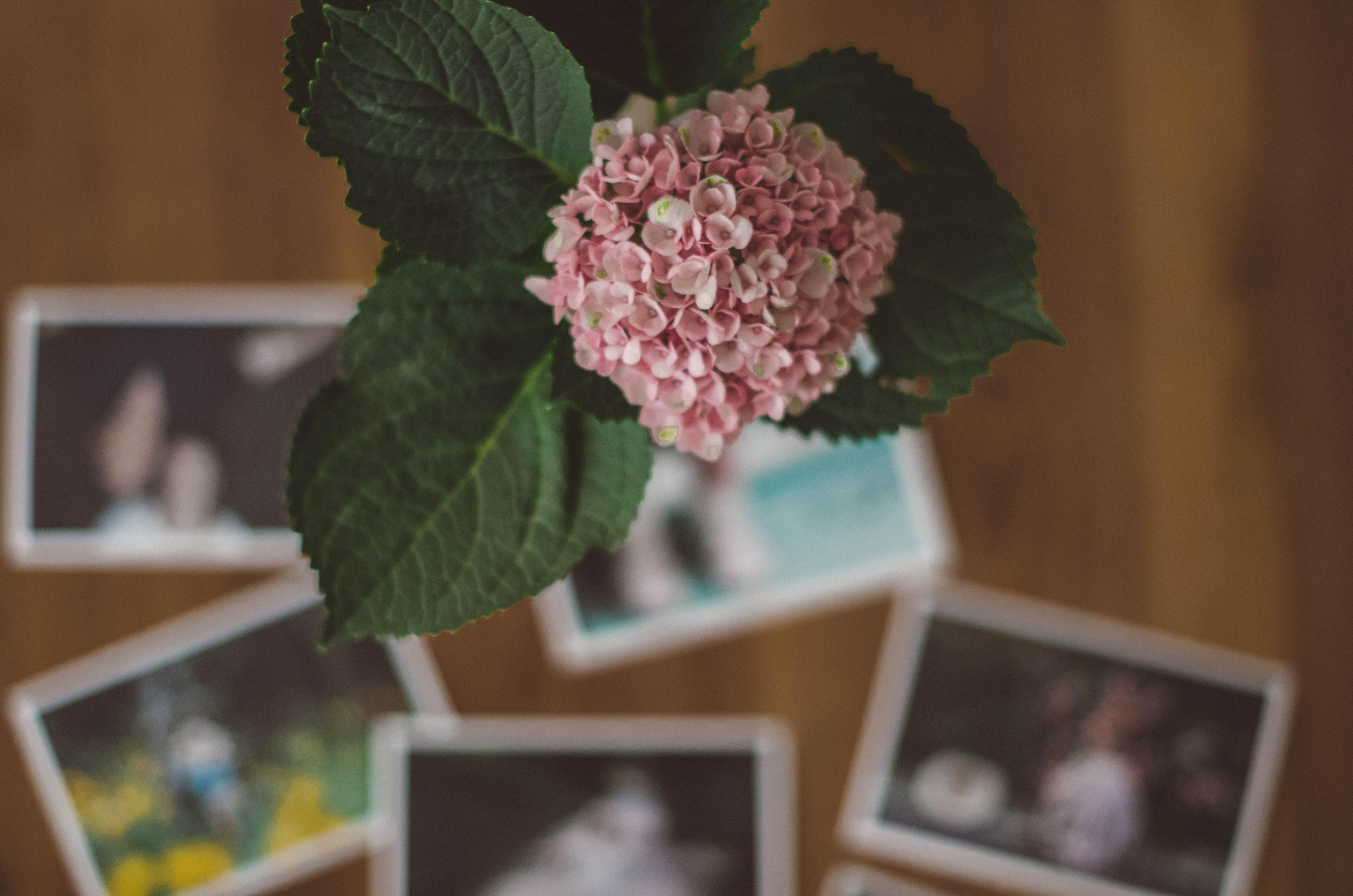 Fotos-ausdrucken-Fotoabzüge